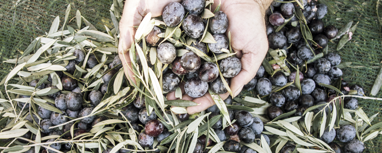 PURE HELLENIC FOODS Α.Ε. Εμπόρια Εξαγωγές Ελληνικό ελαιόλαδο και τρόφιμα